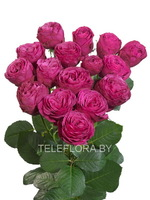 Round bouquet of 5 peony pink spray roses