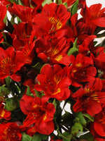 "Flowers Bouquet ""Red Alstroemeria"""