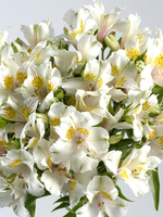 "Flowers Bouquet ""White Alstroemeria"""