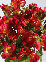 "Flowers Bouquet ""Bordeaux Red Alstroemeria"""