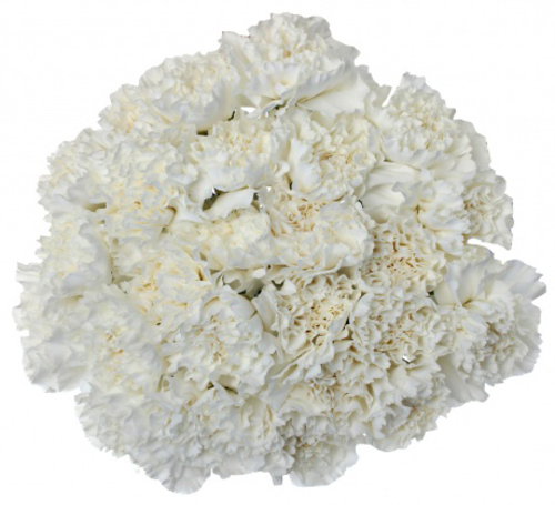 Bouquet of 15 White Carnations Delphy