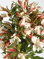"Flowers Bouquet ""Diamond White Alstroemeria"""