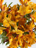 "Flowers Bouquet ""Dimension Yellow Alstroemeria"""