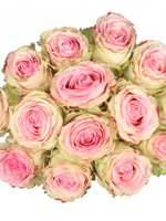 Bouquet of 15 Esperance Pink Roses