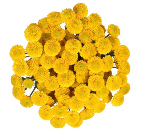 Bouquet of flowers 5 Yellow Shabo Сhrysanthemums