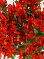 "Flowers Bouquet ""Hot Pepper Red Alstroemeria"""