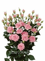 Round bouquet of 5 pink spray roses