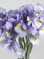"Flowers bouquet ""9 Blue Irises"""