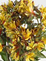 "Flowers Bouquet ""Isola Yellow Alstroemeria"""