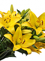 "Flowers Bouquet ""Yellow Lilies"""