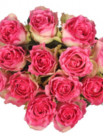 Bouquet of 15 Malibu Pink Roses