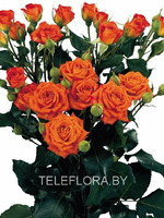 Round bouquet of 5 orange spray roses