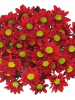 Bouquet of flowers 5 Spray Red Сhrysanthemums