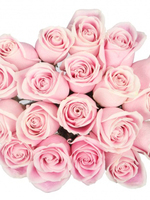 Bouquet of 15  Pink Roses Rosita Vendela