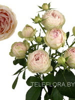 Round bouquet of 5 peony pastel spray roses