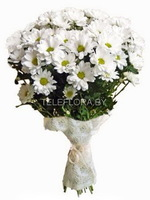 Bouquet of flowers 7 White Сhrysanthemums
